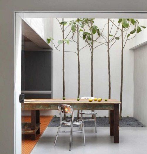 House Plants for Modern Decor on Carlisle Wide Plank Floors Blog